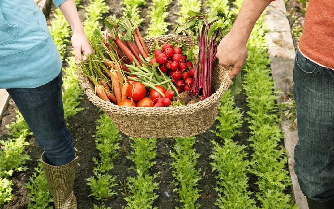 Klimatipps Ernährung