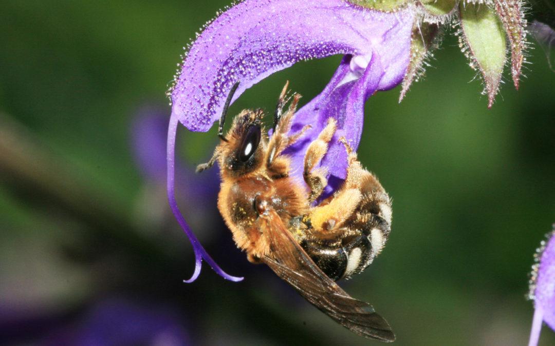 Wildbienen-Hotels und Bienentankstelle – Alles für die Bienen!