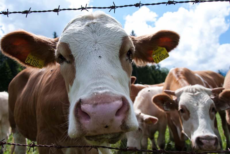Kann Bio Österreich ernähren? – Die österreichische Biostudie