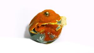 Mandarine02