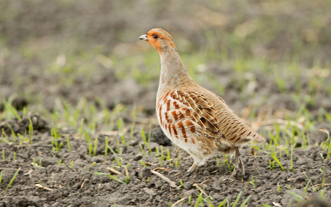 Tag der Artenvielfalt – Birdlife meldet alarmierende Rückgänge bei heimischen Brutvögeln