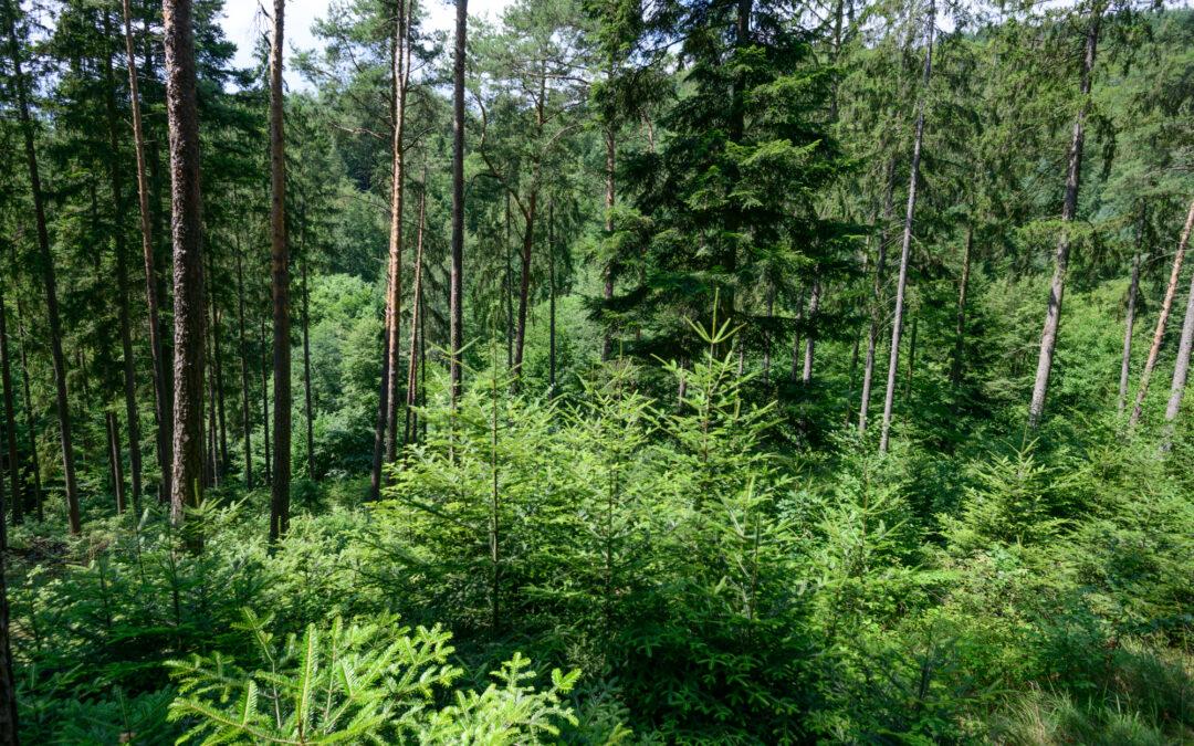 Wie sieht der Wald der Zukunft aus?